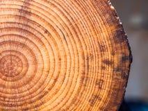 Fondo di legno del pino del taglio Fotografia Stock