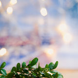Fondo di legno dell'oro dell'agrifoglio di boxus verde di Natale Immagini Stock