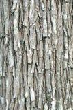 Fondo di legno della corteccia Immagine Stock Libera da Diritti