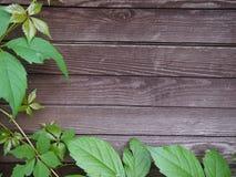 Fondo di legno della deriva con le piante Fotografie Stock