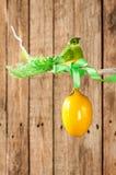 Fondo di legno della molla o di Pasqua - uccello ed uovo su un ramoscello Fotografia Stock Libera da Diritti