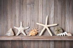 Fondo di legno delle stelle marine delle coperture Immagini Stock Libere da Diritti