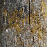 Fondo di legno, dettaglio del primo piano. Fotografie Stock