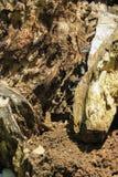 Fondo di legno di decomposizione Fotografie Stock Libere da Diritti