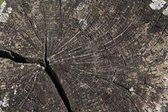 Fondo di legno di sezione trasversale Fotografie Stock Libere da Diritti
