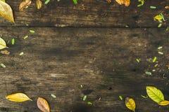 Fondo di legno di struttura con la struttura delle foglie fotografia stock