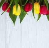 Fondo di legno e tulipani colorati bianco Festa di concezione, Fotografia Stock Libera da Diritti