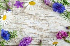 Fondo di legno misero bianco con la struttura dei fiori selvaggi contesto con lo spazio della copia Immagini Stock Libere da Diritti