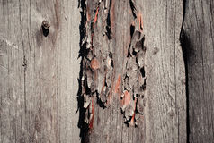 Fondo di legno misero naturale Fotografia Stock