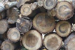 Fondo di legno naturale - primo piano di legna da ardere tagliata Fotografie Stock