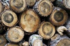 Fondo di legno naturale - primo piano di legna da ardere tagliata Fotografia Stock Libera da Diritti