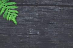 Fondo di legno nero con la foglia fotografie stock libere da diritti