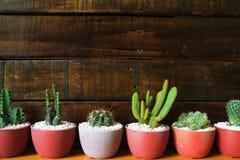Fondo di legno di parecchi piccoli cactus con spazio per testo Fotografie Stock