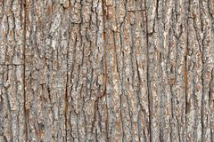 Fondo di legno di struttura della plancia della corteccia di albero di Brown fotografie stock libere da diritti