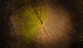 Fondo di legno strutturato scuro di sezione trasversale Fotografia Stock Libera da Diritti
