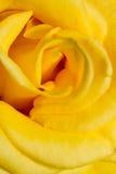 Fondo di macro del ritratto della rosa di giallo fotografia stock
