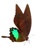 Fondo di macro della farfalla Immagine Stock