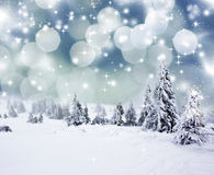Fondo di Natale con gli abeti nevosi Fotografia Stock Libera da Diritti