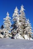 Fondo di Natale con gli abeti nevosi Fotografie Stock