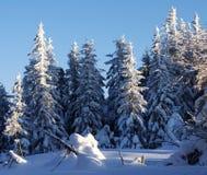 Fondo di Natale con gli abeti nevosi Fotografia Stock