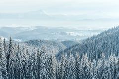 Fondo di Natale con gli abeti nevosi e le precipitazioni nevose pesanti immagini stock libere da diritti
