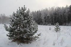Fondo di Natale con gli alberi nevosi e le precipitazioni nevose pesanti Immagine Stock