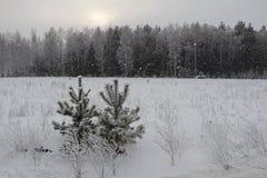 Fondo di Natale con gli alberi nevosi e le precipitazioni nevose pesanti Fotografia Stock Libera da Diritti