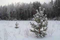 Fondo di Natale con gli alberi nevosi e le precipitazioni nevose pesanti Immagini Stock Libere da Diritti