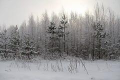Fondo di Natale con gli alberi nevosi e le precipitazioni nevose pesanti Fotografia Stock
