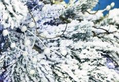 Fondo di Natale con il gemito bianco per i saluti fotografia stock