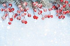 Fondo di Natale con le bacche Fotografie Stock Libere da Diritti