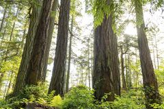 Fondo di nord-ovest pacifico del paesaggio dell'oceano del cielo del faro di Vancouver Fotografia Stock Libera da Diritti
