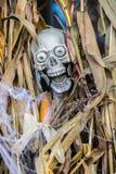 Fondo di notte di Halloween con il cranio spaventoso Fotografia Stock
