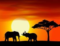 Fondo di paesaggio dell'Africa con l'elefante Fotografia Stock Libera da Diritti