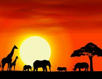 Fondo di paesaggio di safari dell'Africa Fotografia Stock Libera da Diritti