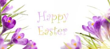 Fondo di Pasqua con i fiori della molla Fotografia Stock
