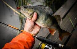 Fondo di pesca Pertica del trofeo e barretta di filatura fotografia stock