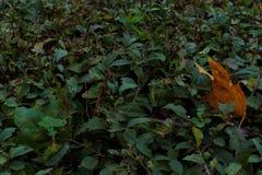 Fondo di piccole foglie verdi Fotografie Stock Libere da Diritti