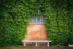 Fondo di pietra dell'edera e del banco Fotografia Stock