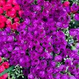 Fondo di plastica del fiore Fotografia Stock