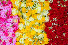 Fondo di plastica variopinto del fiore Fotografia Stock