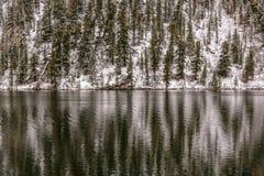 Fondo di riflessione dell'acqua della neve della foresta fotografie stock
