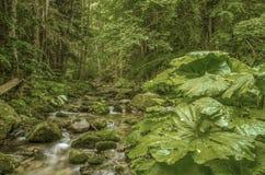 """Fondo di rilassamento del †selvaggio della natura """" immagine stock"""
