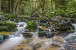 """Fondo di rilassamento del fiume del †selvaggio della natura """", Mariovo, Macedonia immagini stock"""