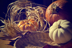 Fondo di ringraziamento con le zucche. Retro carta Fotografie Stock