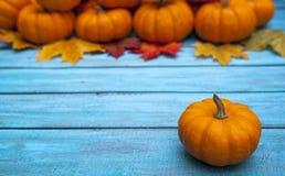 Fondo di ringraziamento della zucca di autunno Fotografie Stock