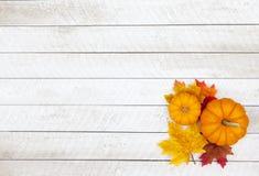 Fondo di ringraziamento della zucca di autunno Immagini Stock