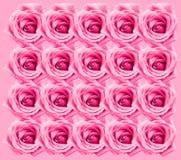 Fondo di Rosa immagini stock