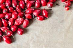 Fondo di rosso delle bacche di Sweetbrier Fotografie Stock Libere da Diritti