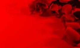Fondo di rosso delle rose rosse 0n Fotografie Stock Libere da Diritti